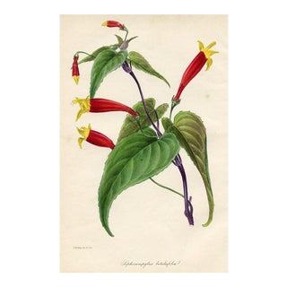1842 Tropical Botanical Print