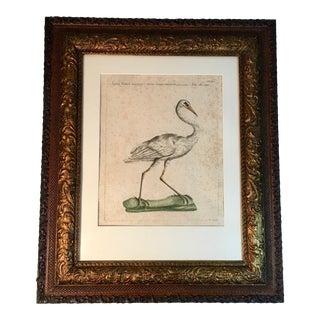 19th C. Framed Natural History Bird Print