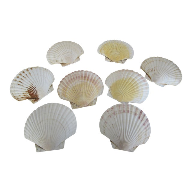 Natural Sea Shells - Set of 8 - Image 1 of 6