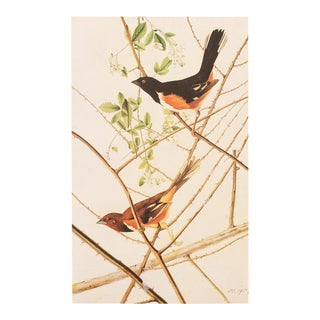 1960s Cottage Lithograph of Rufuous-Sided Towhee by Audubon