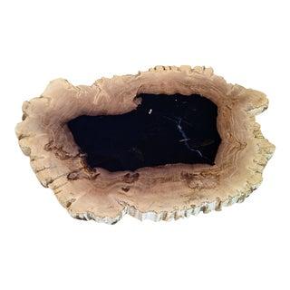 Polished Petrified Wood Tray