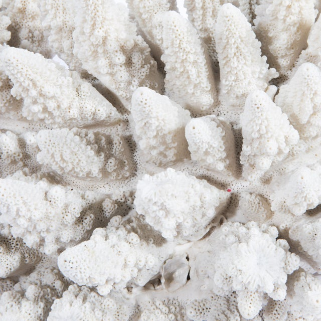 LARGE WHITE CORAL SPECIMEN - Image 10 of 10