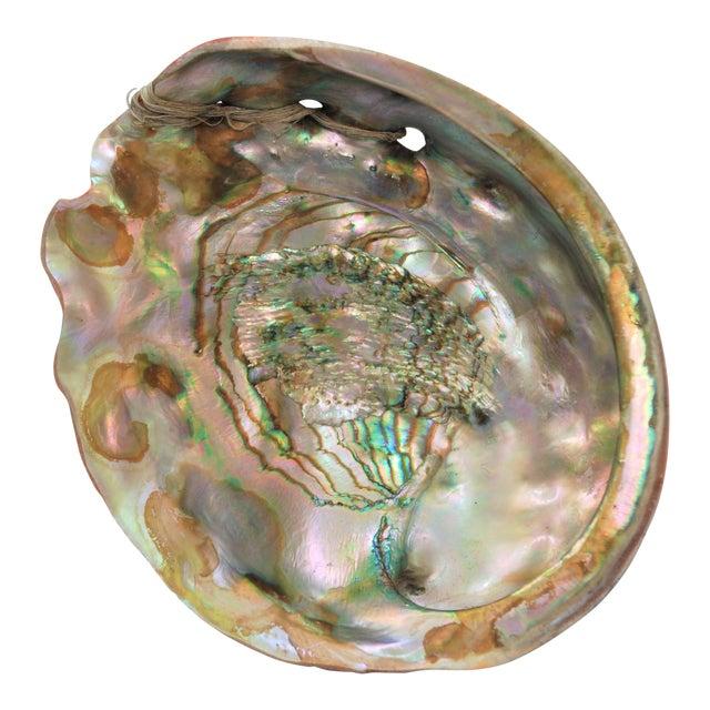 Vintage Large Abalone Shell - Image 1 of 8