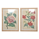 Image of 1990s Camellia and Petunia Botanical Framed Art Prints - A Pair For Sale