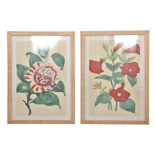 1990s Camellia and Petunia Botanical Framed Art Prints - A Pair For Sale