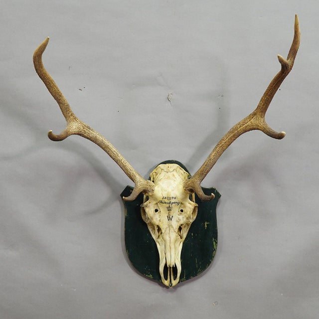 an uneven 8 pointer black forest deer trophy from the palace of salem in south germany. shoot by a member of the lordly...
