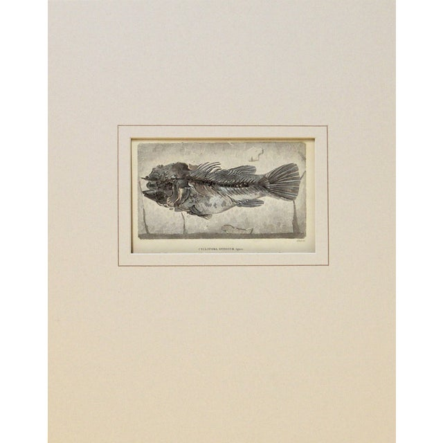 Blue Fossilized Fish Print - Image 1 of 2