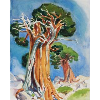 """Age-Old Juniper, Susie Lake"" 20th Century Watercolor For Sale"