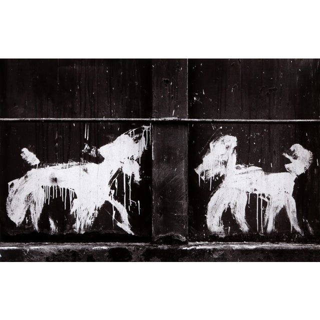 Modern Carlos Gustavo, Two Peter Mayer Dogs on Dumpster, Nyc, Gelatin Silver Print on Fiber Paper, Signed Verso For Sale - Image 3 of 3