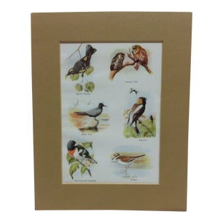 "1960 ""Birds"" Matted Color Animal Print For Sale"