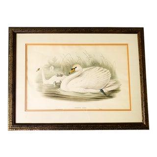 Antique Gould, Joseph Wolf, h.c. Richter Hand Colored Original Lithograph Artwork For Sale