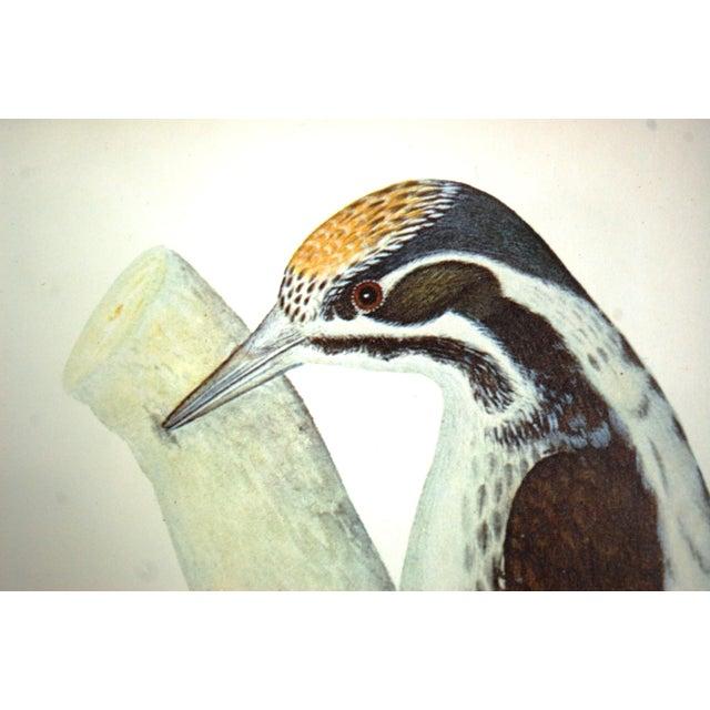 Vintage Framed Bird Prints - Set of 3 - Image 6 of 10