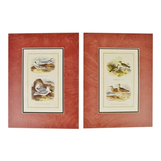 Matted Exotic Bird Prints - a Pair
