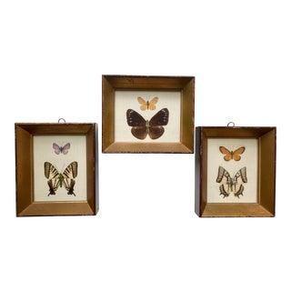 Antique Framed Butterfly Specimens - Set of 3