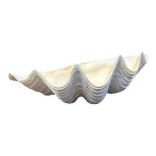 1920's Natural Oversized Clam Shell For Sale