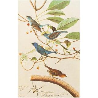 "1966 ""Indigo Bird"" Lithograph Print by Audubon For Sale"
