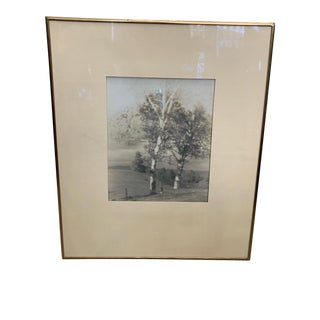 "1910 ""Two Birches"" Platinum Print For Sale"