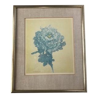 Vintage Chrysanthemum Print