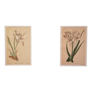 1880 Antique French Botanical Chromolithographs-Set of 2, Matted For Sale