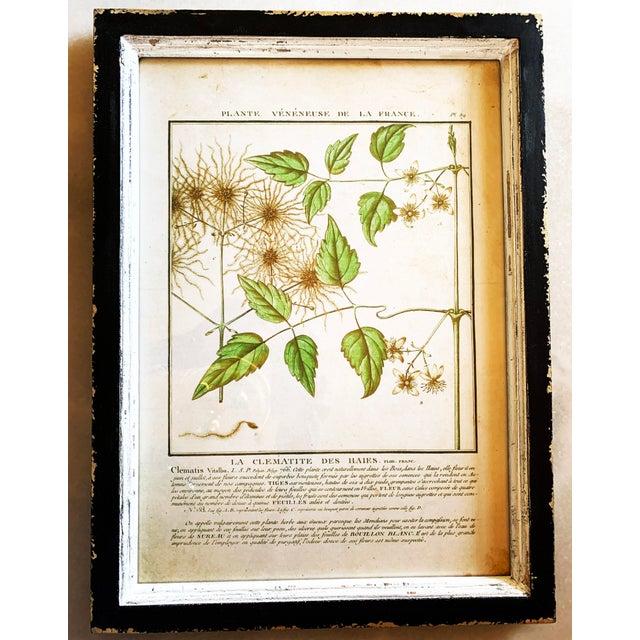 2010s Vintage Framed French Botanical Prints Reproductions - Set of 4 For Sale - Image 5 of 13