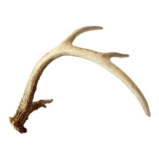 Vintage Single Antler Shed