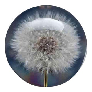 Natural White Dandelion Paperweight For Sale