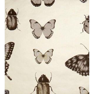 Papilio Wallpaper by Clarke & Clarke - Price Per Yard For Sale