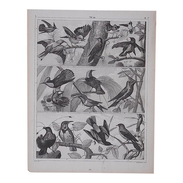 Antique Lithograph-Birds - Image 1 of 3