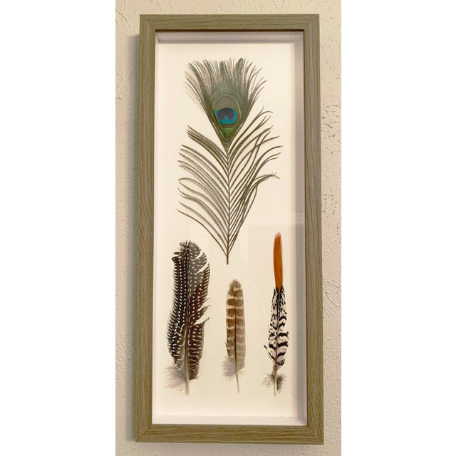 Four Feathers Framed Under Glass by Kalalou For Sale In Denver - Image 6 of 6