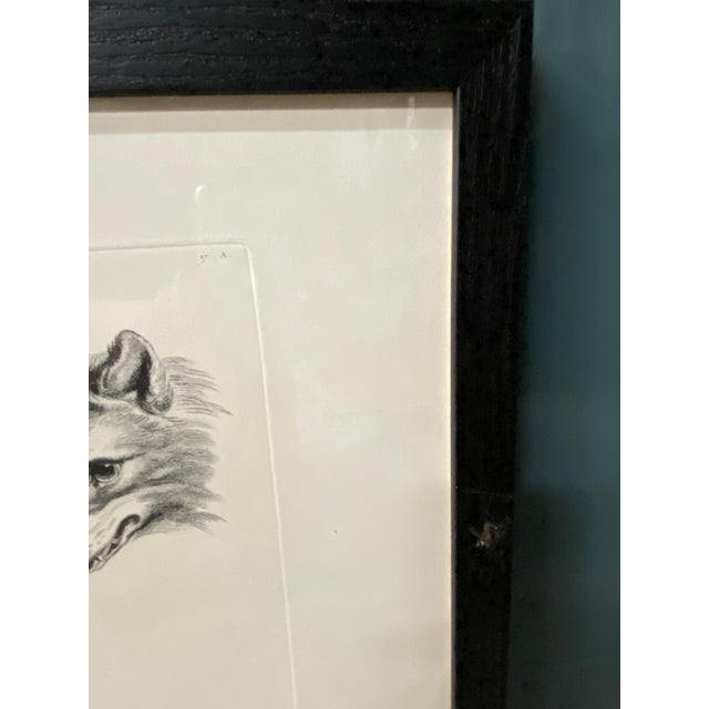 Figurative Man as Fox - Physiognomic Heads Series Framed Illustration by Charles Le Bru For Sale - Image 3 of 11