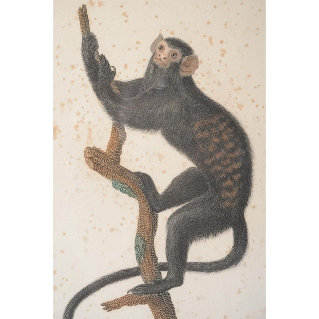 18th-C. Colored Monkey Print by Jean Baptiste - Image 6 of 10