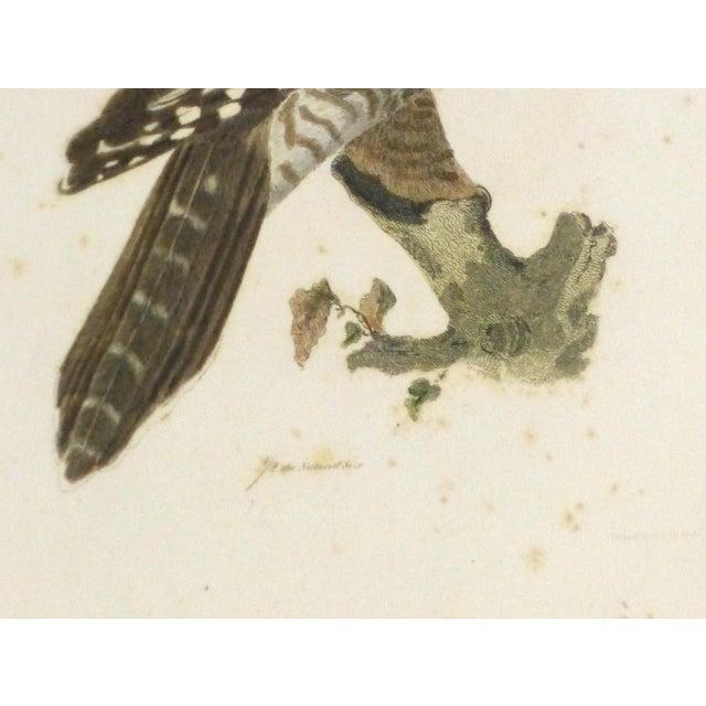 Antique Bird of Prey Engraving Print, C. 1850 - Image 3 of 4