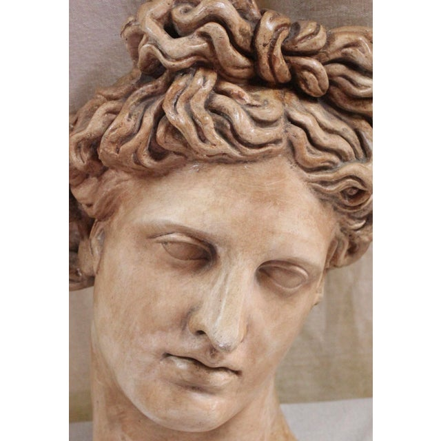 Early 20th century plaster copy of the head of the famous statue (Apollo Belvedere) in the Vatican Museum. Minor chips.