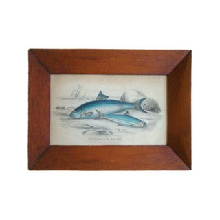Framed Antique Fish Engravings, Set of 4 Preview