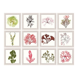 Bradbury Seaweeds, Framed Artwork - Set Of 12 For Sale