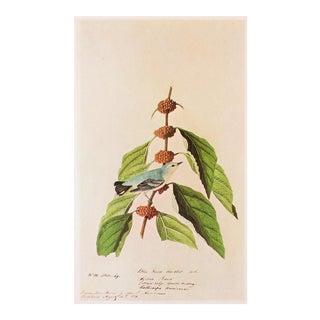 1966 Cerulean Warbler by Audubon, Vintage Cottage Print For Sale