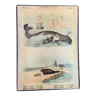 19th C. French Naturalist's Ocean Mammals Lithograph