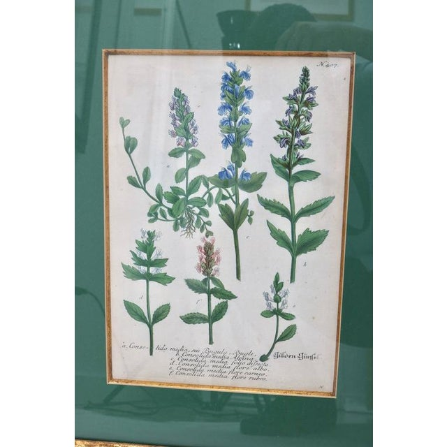 Late 18th Century Antique 18th Century Botanical Prints Hand-Colored Engravings - a Set of 6 For Sale - Image 5 of 12
