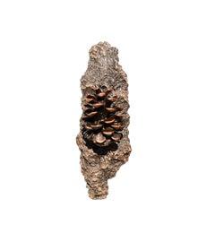 Image of Pine Hardware