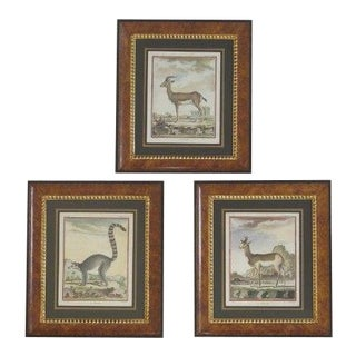 Vintage Animal Engravings in Burl Walnut Frames - Set of 3 For Sale
