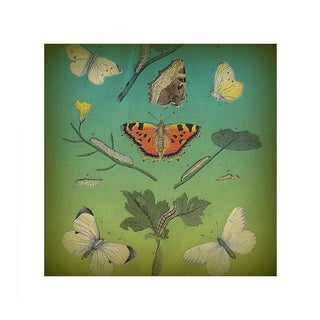 Antique 'Insects on Green' Archival Print