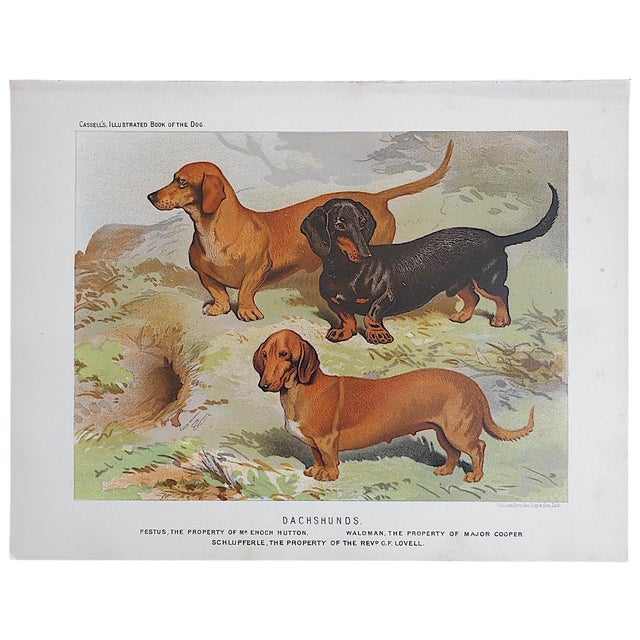 "Antique Dog Lithograph ""Dachshunds"" - Image 1 of 3"