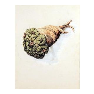 Drawing of Peyote Bundle For Sale