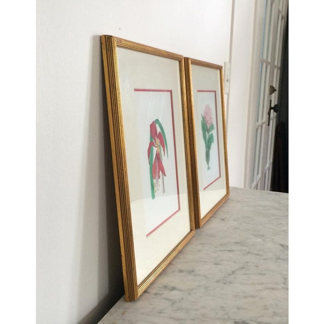 Pair of Botanical Chelsea House Flower Study Gallery Wall Drawings in Matching Gilt Frames For Sale In Orlando - Image 6 of 13