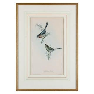 Dartford Warbler, Gould, Birds of Europe 1832-1837 For Sale