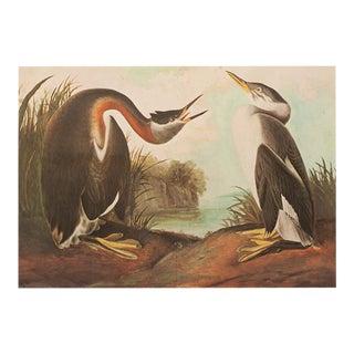 XL 1966 Red-Necked Grebe by John James Audubon, Vintage Cottage Print For Sale