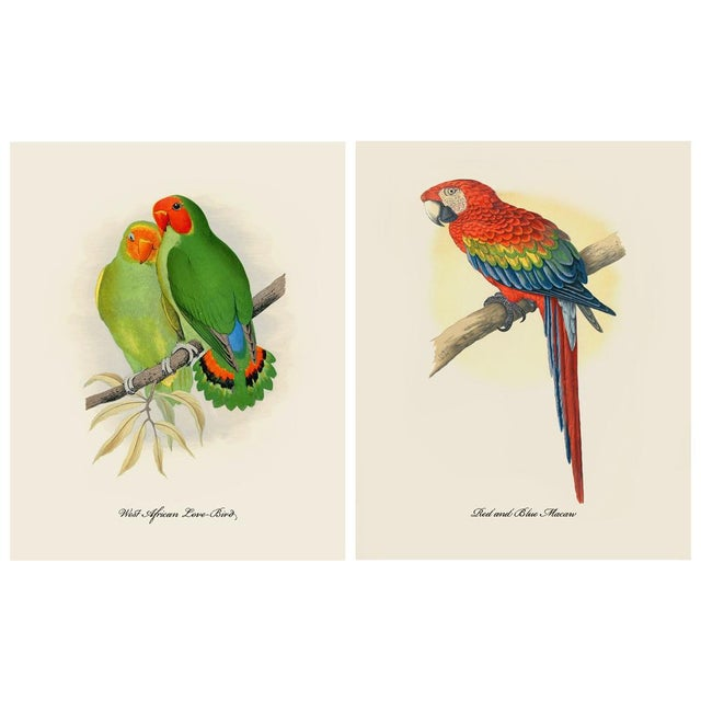 2010s 1884 Alexander Francis Lydon, Parrot Reproduction - Set of 12, N2 For Sale - Image 5 of 13