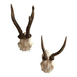 Vintage European Roe Deer Antlers - a Pair For Sale