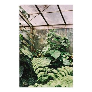 """""""Greenhouse"""" Original Framed Photograph"""