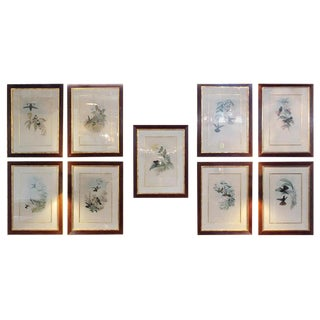 Group of Nine 19 Century John Gould Copperplate Hand Engravings Framed & Matted For Sale